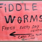 fiddle-worms-300x243